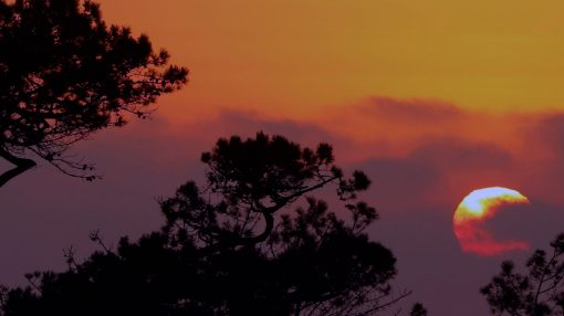 African Sunset Background Video
