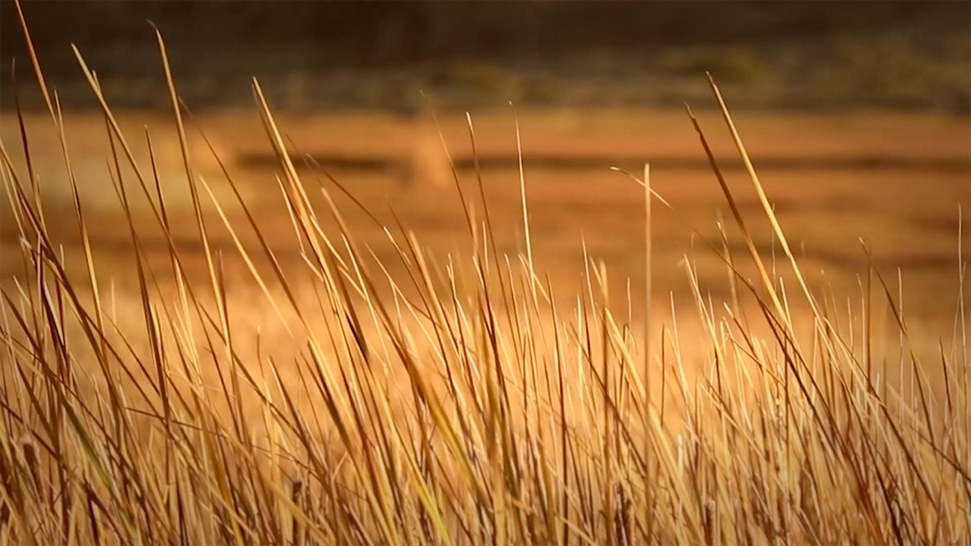 Fall Background Videos